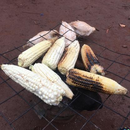 Mine & Kori's Job - Keep the Chickens away from the Corn