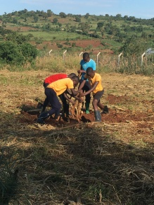 Boys Removing a Stump in the Girl's Farm